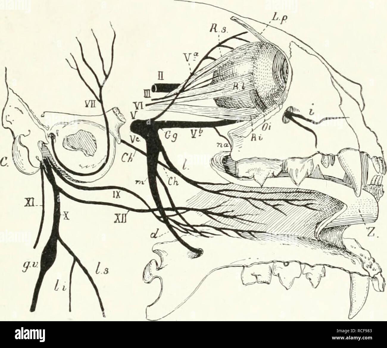Die Sugetiere Einfhrung In Die Anatomie Und Systematik Der