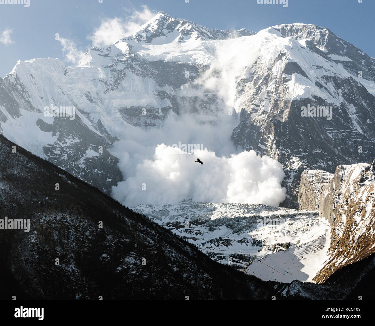 Bird soaring in Upper Pisang and a snow avalanche on Annapurna II mountain, Annapurna Circuit, Nepal - Stock Image