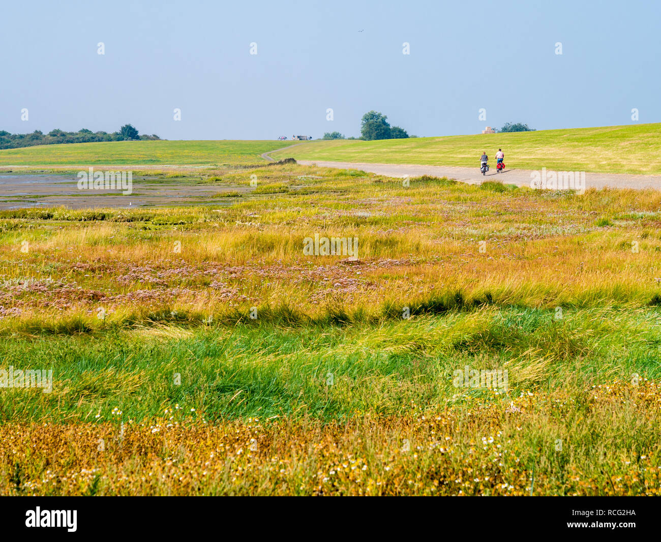 People riding bicycles on dike with salt marshes at low tide, West Frisian island Schiermonnikoog, Netherlands Stock Photo
