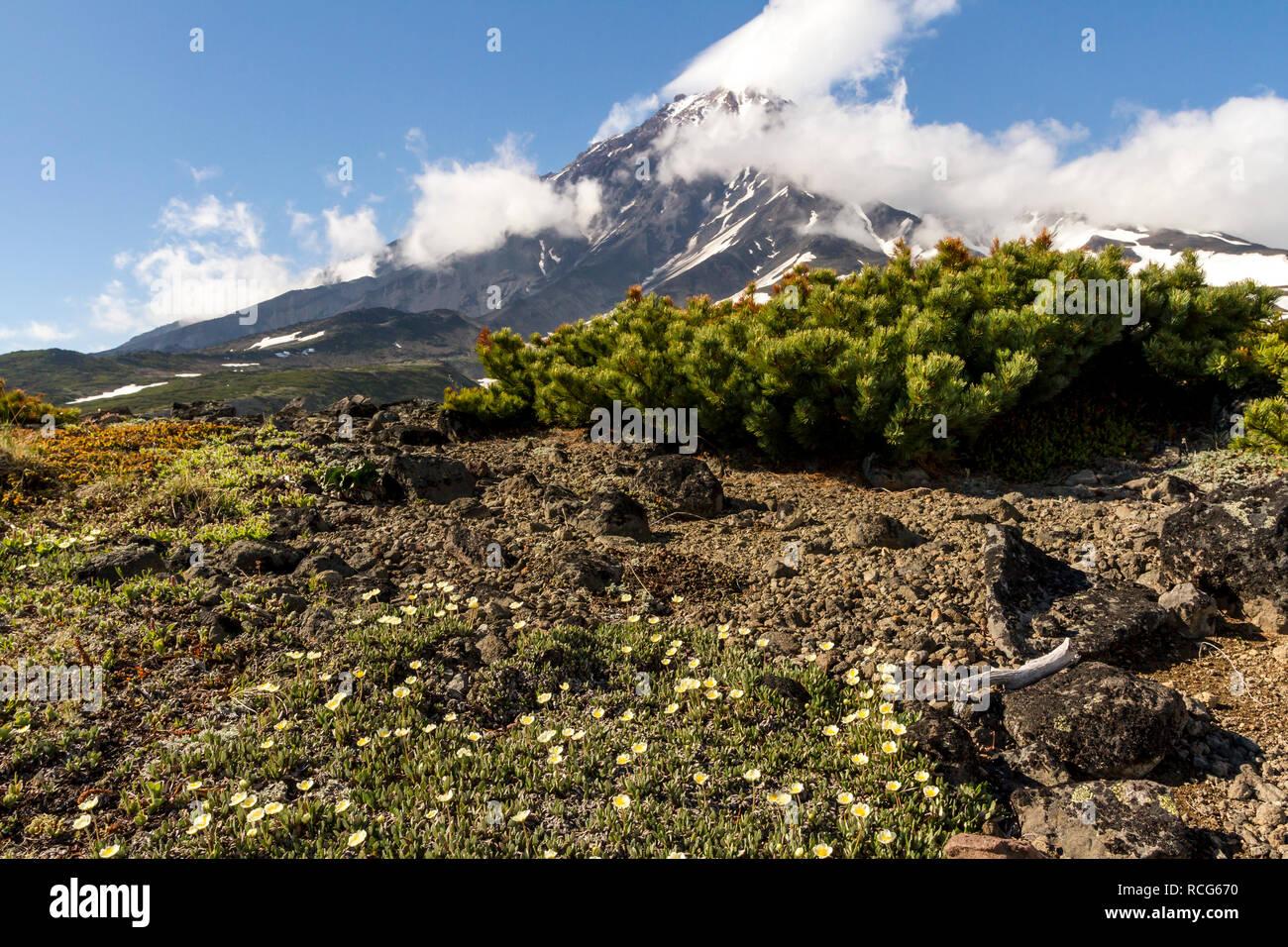 View of the stratovolcano Volcano Koryaksky, Kamchatka Peninsula, Russia - Stock Image