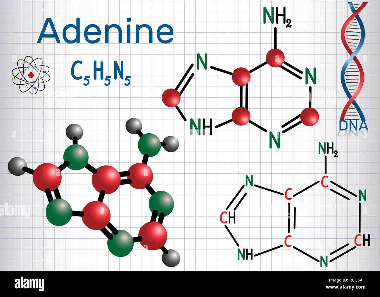 Adenine (A, Ade) - purine nucleobase, fundamental unit of the genetic code in DNA and RNA. Structural chemical formula and molecule model. Sheet of pa - Stock Image