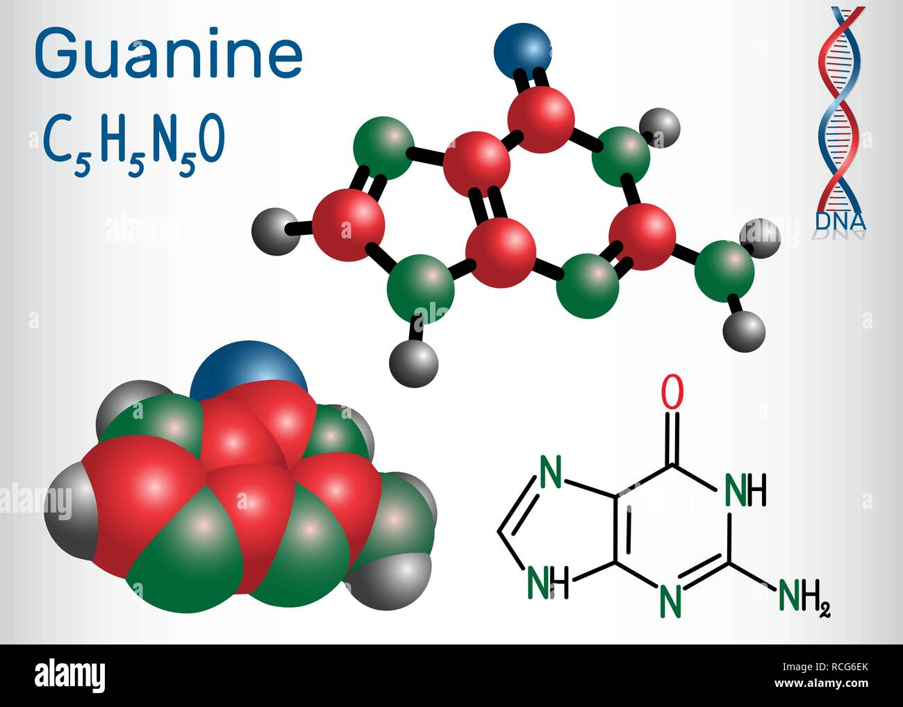 Guanine (G, Gua) - purine nucleobase, fundamental unit of the genetic code in DNA and RNA. Structural chemical formula and molecule model. Vector illu - Stock Image