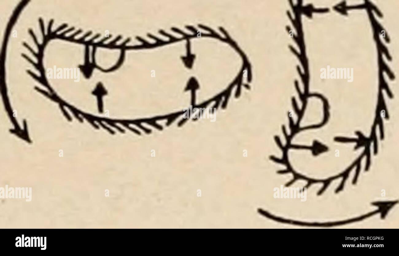 oral stellungen