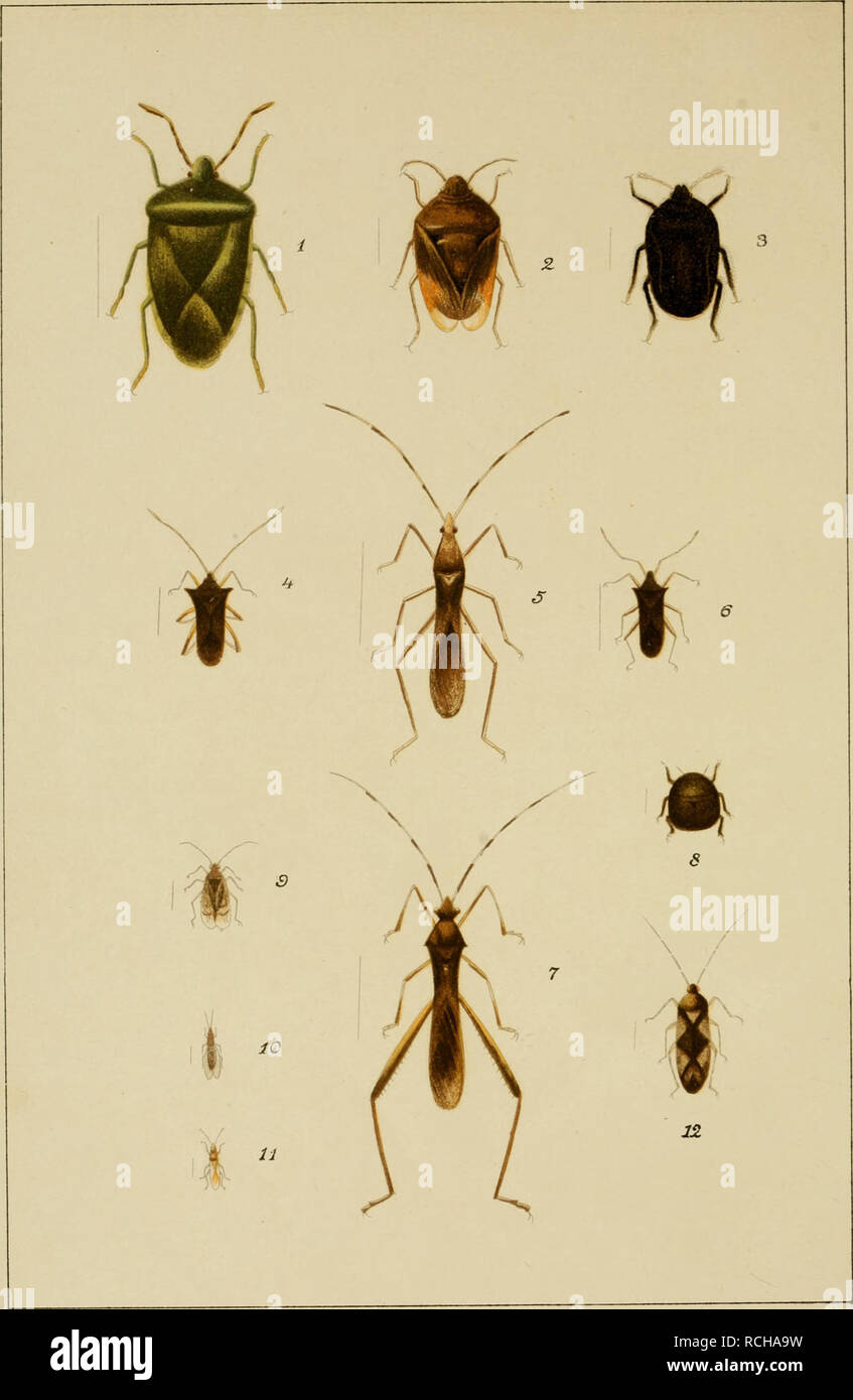 . Die schädlichen und nützlichen insekten : vom zuckerrohr Formosas. Insects; Sugarcane. . Please note that these images are extracted from scanned page images that may have been digitally enhanced for readability - coloration and appearance of these illustrations may not perfectly resemble the original work.. Matsumura, Shonen, b. 1872; Metcalf Collection (North Carolina State University). NCRS. Tokyo : The Keiseisha - Stock Image