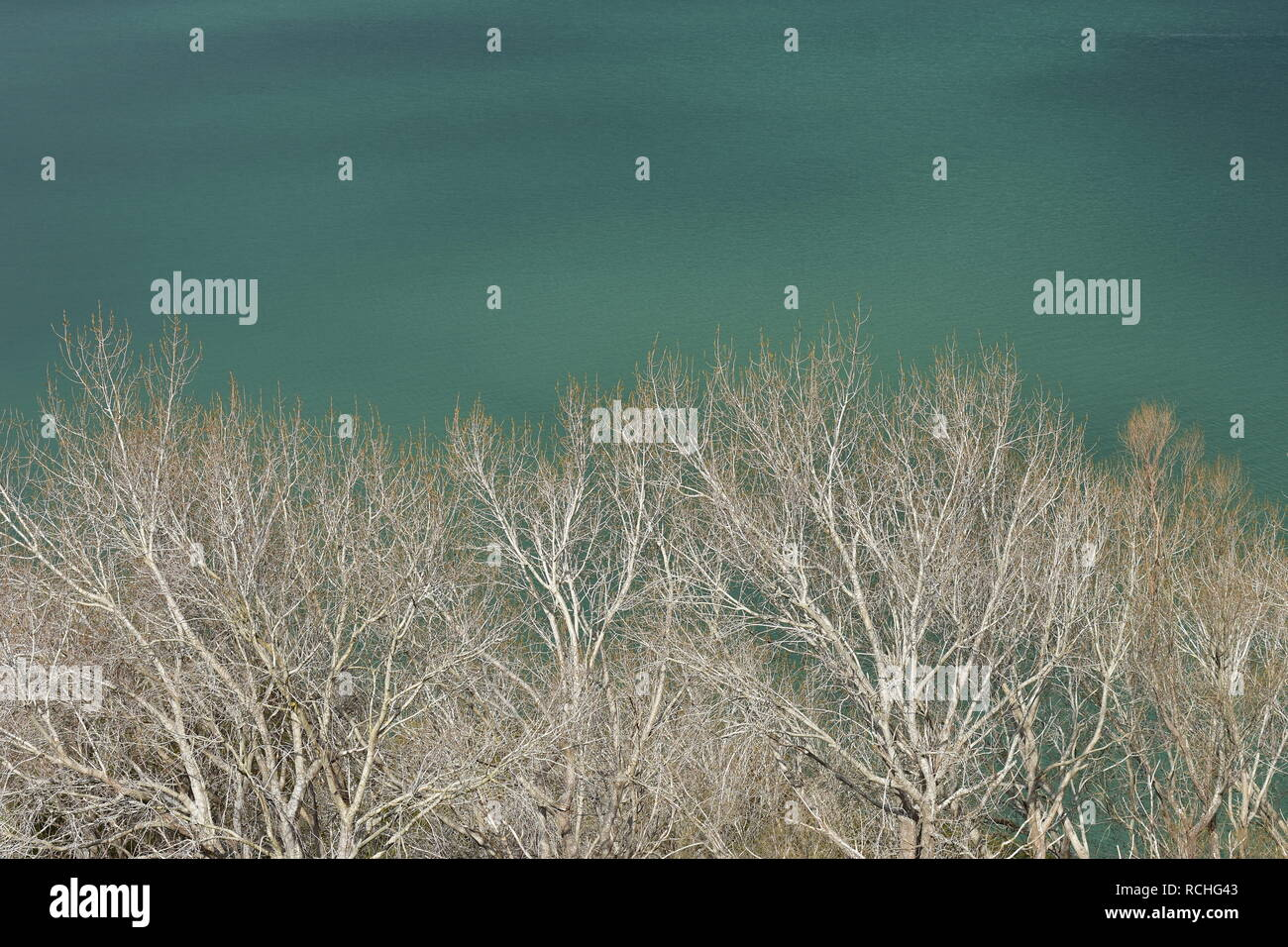 Green sea surface behind dense tree tops of trees without leaves and with white bark on stormy day. - Stock Image