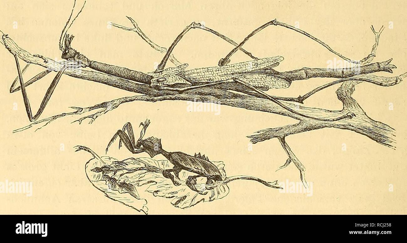 Stachel im herzen ebook by sandra brown 9783641229689 | rakuten kobo.