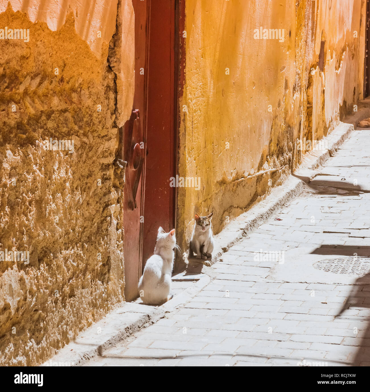 Beautiful stray cat sleeps on the streets of Morocco. Beautiful fairy-tale streets of Morocco Stock Photo