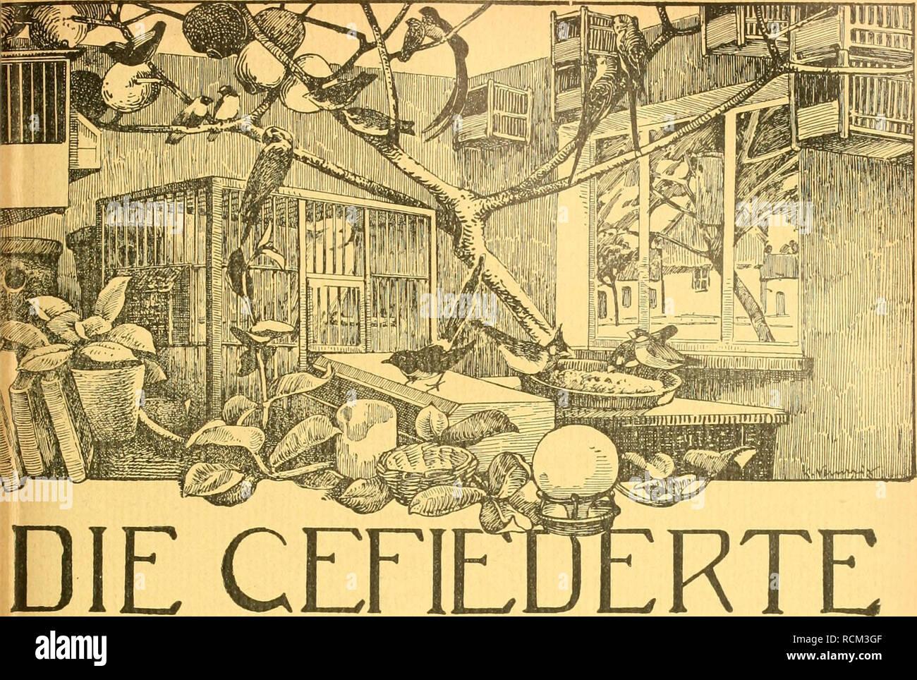 . Die Gefiederte Welt. Birds. left 36. 9, September IQ15. Jahrgang XLIV.. WELT V0CHEN5CHRIFT FÜR —VOGELLIEBHABER.— Begründet von Dr. Karl RuB. Herausgegeben von Karl Neunzig in Hermsdorf bei Berlin. INHALT: Dompfaffenzüchtung. Von Friedrich Busse. Allerlei eigene Beobachtungen und kritische Literaturstudien über allerhand heimische Waldvögel. Von Max Rendle. (Fortsetzung.) Allerlei über Vogelkrankheiten und:sonstiges. Von W. Hiltmann, Berlin. Mischling Siiberschnabeix Elsterchen. Von E. B. in B. Von meinem Rotkehlchen. Von stud. med. Oelschlägel. (Schluß.) Kleine Mitteilungen. — Sprechsaal. —  Stock Photo