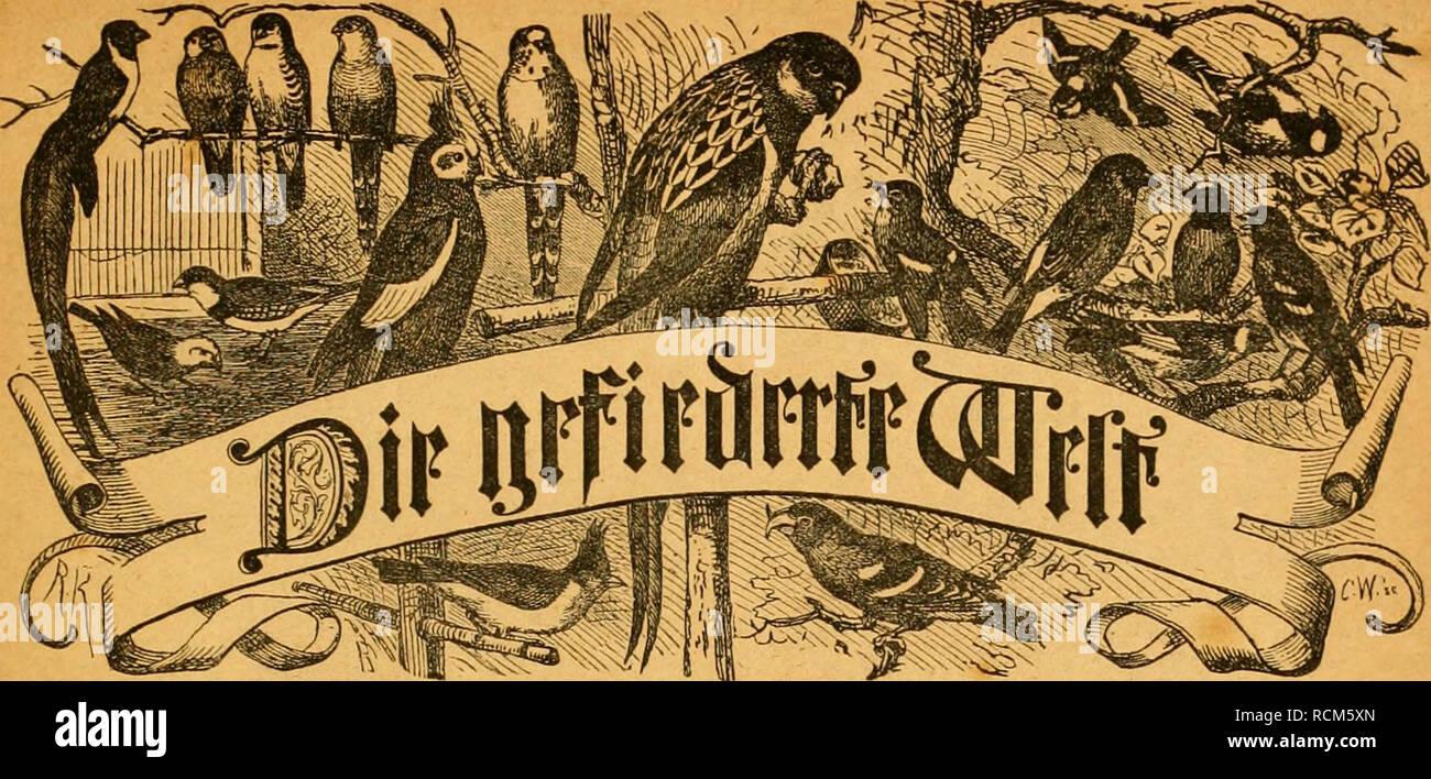 . Die Gefiederte Welt. Birds. äcitfdjrift füi* S^Dgellieliljakr, =3ütfjtcr mib --^aiiWer- 93cftetliin3cu biivdj jcbe SJurf}» ^aiiMimg fcroie jefce 'l'cftanftalt. cgelmavtts. — Sin« ben sßtreinen: aufntf jur Einlage eines aBeftfälifd;en 3ciJtogifd)en (äartenu ; Crnit^cli)gifd;ei- SSercin jn Stettin. — SBvieflDedjjel. Slnseigtn. — 3im ^ogelft^uij. (©^Ing.) 'D^adjbcm fid; ukr bie evfterc gvagc bie febcit' tenbflen ®e(c^vtcu imb md)i minbcr jafjd'cicfje V'icbtjabev nad) aikn Seiten t;in au%')>rccl)cii, ift bicfclbc' iuc( con 3((len, mit ber d;minbcnb gcriiiijeit 9ludnal;nicn, itlii)t n}crben.  - Stock Image