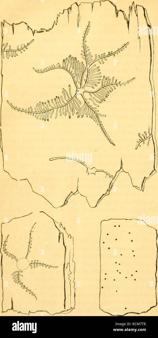 . Die forst-insecten oder Abbildung und beschreibung der in den wäldern Preussens und der nachbarstaaten als schädlich oder nützlich bekannt gewordenen insecten; in systematischer folge und mit besonderer rücksicht auf die vertilgung der schädlichen. Im auftrage des chefs der zweiten abtheilung des Königl. Preuss. Forest insects. 192 Schädliche Käfer. geringen Stangenhölzer vorzugsweise (be- sonders wo im Dickicht viel Windbruch ist) angreifend, oder endlich auch starke Fichten von oben bis unten allein be- wohnend, wie ich mich am Einersberge in Gesellschaft des Herrn Saxesen selbst überzeugt Stock Photo