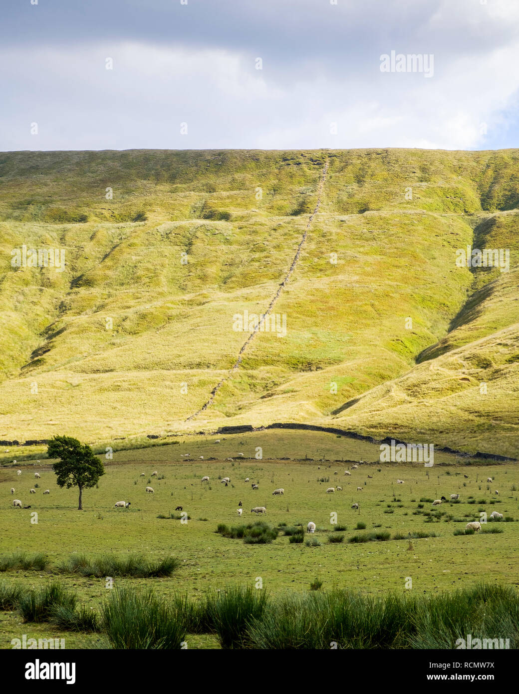 Sunlight breaking out on the hillside of Rushup Edge with sheep grazing in the shadows below. Vale of Edale, Derbyshire, Peak District, England, UK - Stock Image
