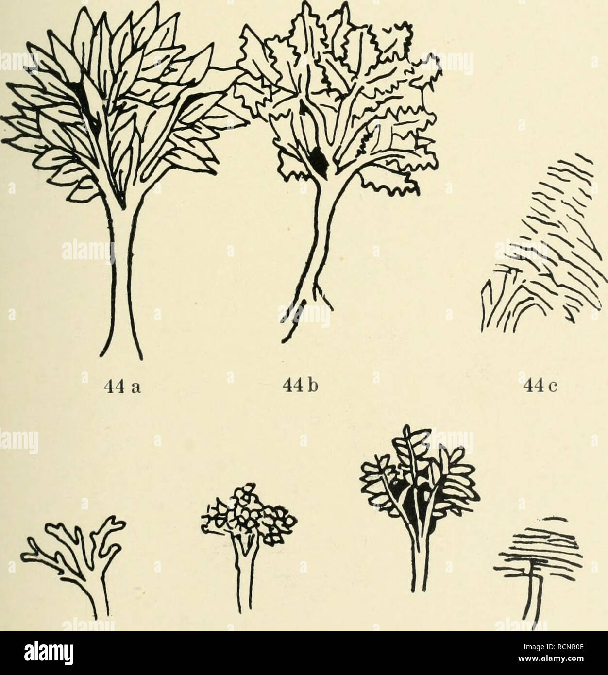 . Die Baumzeichnung in der deutschen Graphik des 15. und 16. Jahrhunderts. Ein Beitrag zur Geschichte der deutschen Landschaftsdarstellung. Trees; Plants in art; Landscape drawing; Engraving. 43c. 45 a 45 b 45c 45d. Please note that these images are extracted from scanned page images that may have been digitally enhanced for readability - coloration and appearance of these illustrations may not perfectly resemble the original work.. Beth, Ignaz, 1877-1918. Strassburg : J. H. E. Heitz - Stock Image