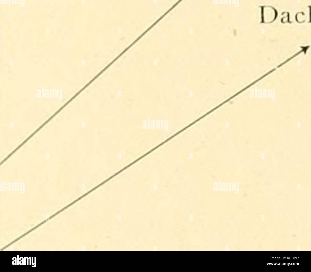 . Die Abstammung der ältesten Haustiere ... Domestic animals. Windspiele Haussa- lajrdhund Sudanhund Altägypt. Jagd« indliund /. Altägyptisclier Windliund Cauis s/wr//s/s (Aelteste Domestiliation in Aethiopien.) DIE ABSTAMMUNG DER DOGGEN-GRUPPE. Die Familie der Doggen bildet das reine Gegenstück zur vorigen (jruppe der Windhunde, indem sie fast durchweg grosse, schwere, muskelkrättige Haushunde umfasst, deren pschischer Charakter durch grosse Anhänglichkeit an den Besitzer einerseits, durch stark agressives Wesen dem Gegner gegen- über anderseits eine scharf ausgesprochene Nuance erhält. Der  - Stock Image