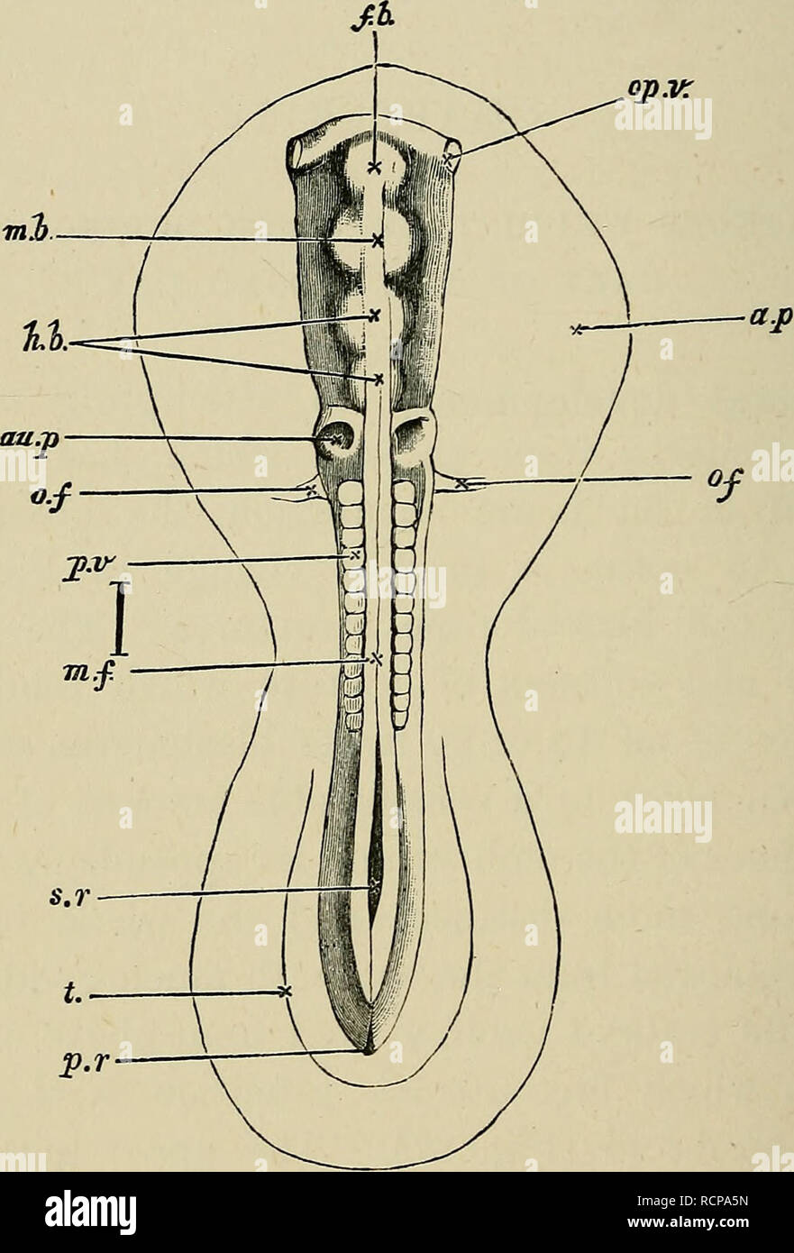 The elements of embryology  Embryology