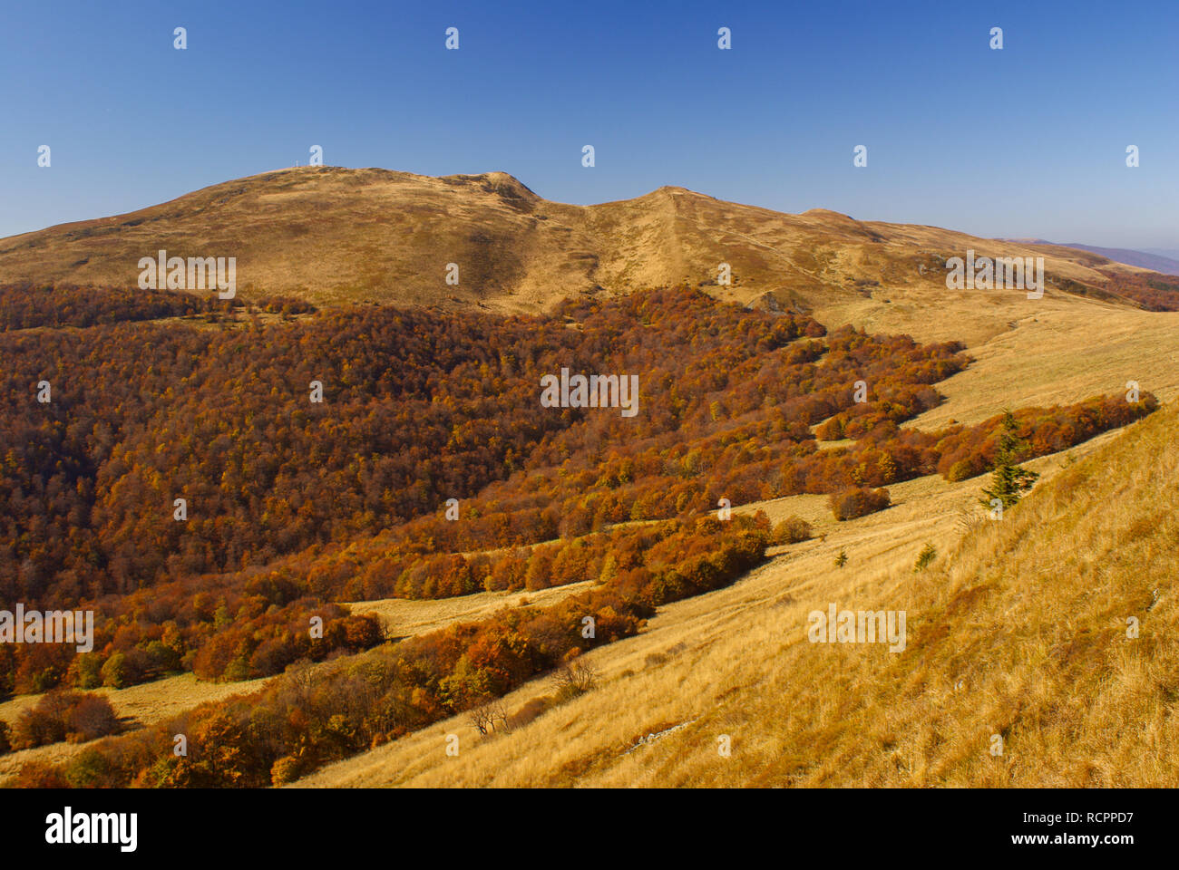 Mountain meadow and forests in autumn. Bieszczady National Park. Tarnica - Stock Image