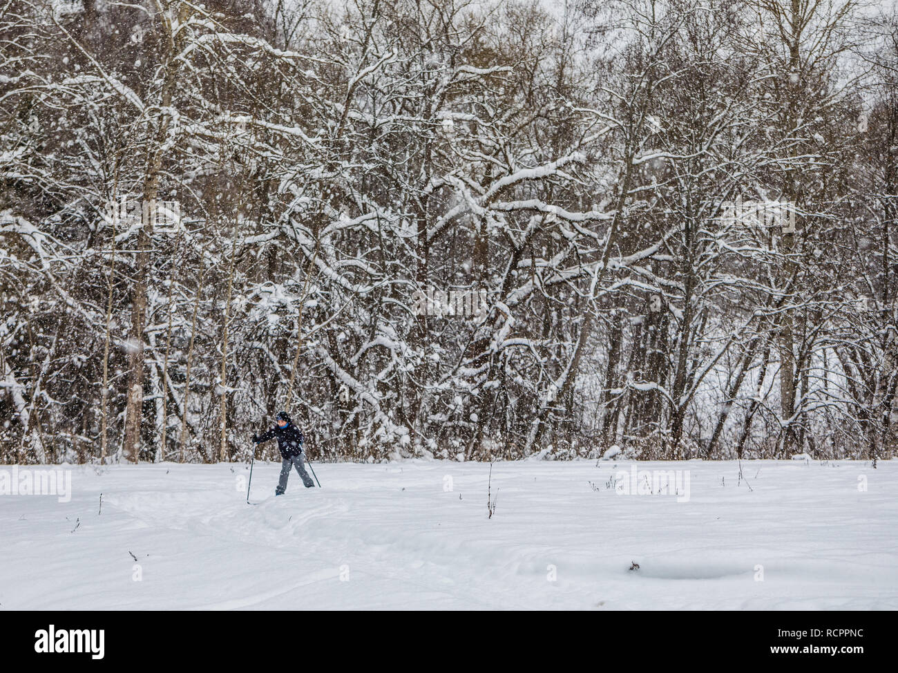 Boy skiing in winter worest, selective focus, snowing time, toned - Stock Image
