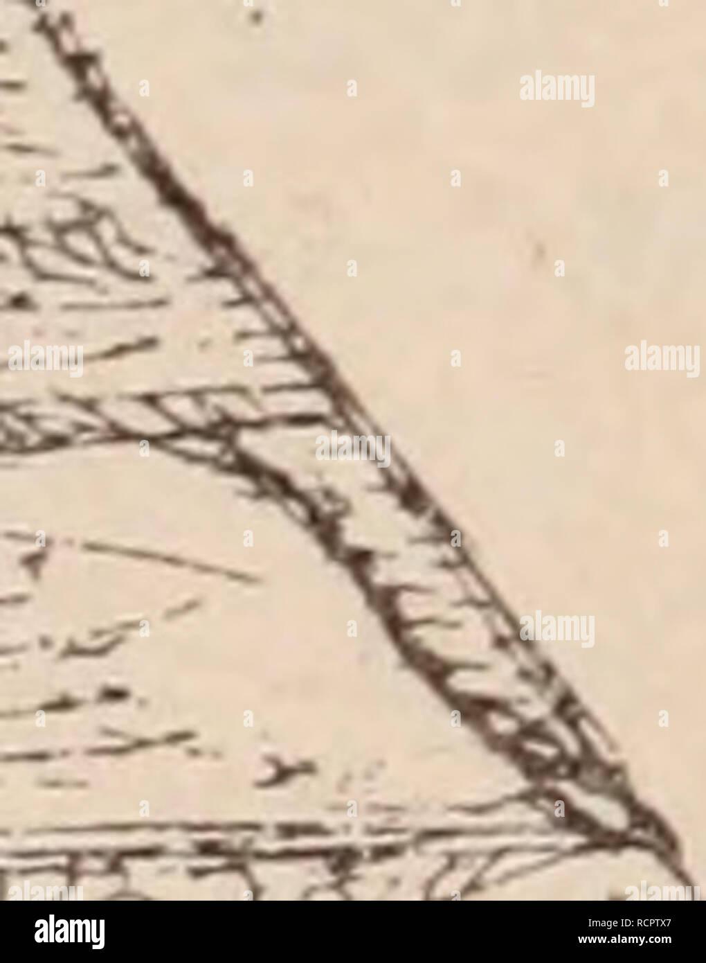 . Dictionnaire d'horticulture illustré / par D. Bois  préface de Maxime Cornu  avec la collaboration de E. André ... [et al.].. Horticulture; Dictionaries.. Fig. 332. â Caisse à Pêches. Please note that these images are extracted from scanned page images that may have been digitally enhanced for readability - coloration and appearance of these illustrations may not perfectly resemble the original work.. Bois, D. (Désiré), 1856-1946.. Paris : P. Klincksieck, 1893-1899. Stock Photo