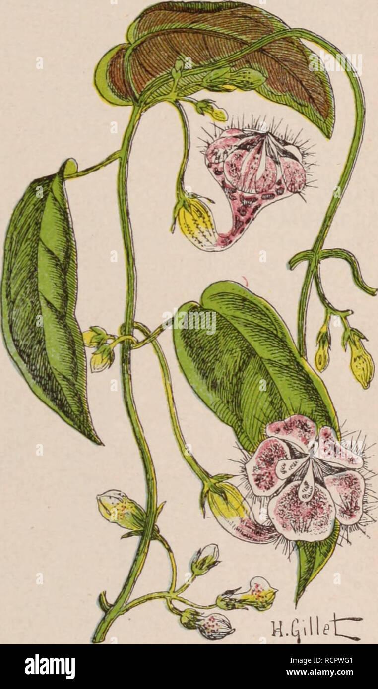 Planter Dans Une Caisse En Bois dictionnaire d'horticulture illustré / par d. bois préface