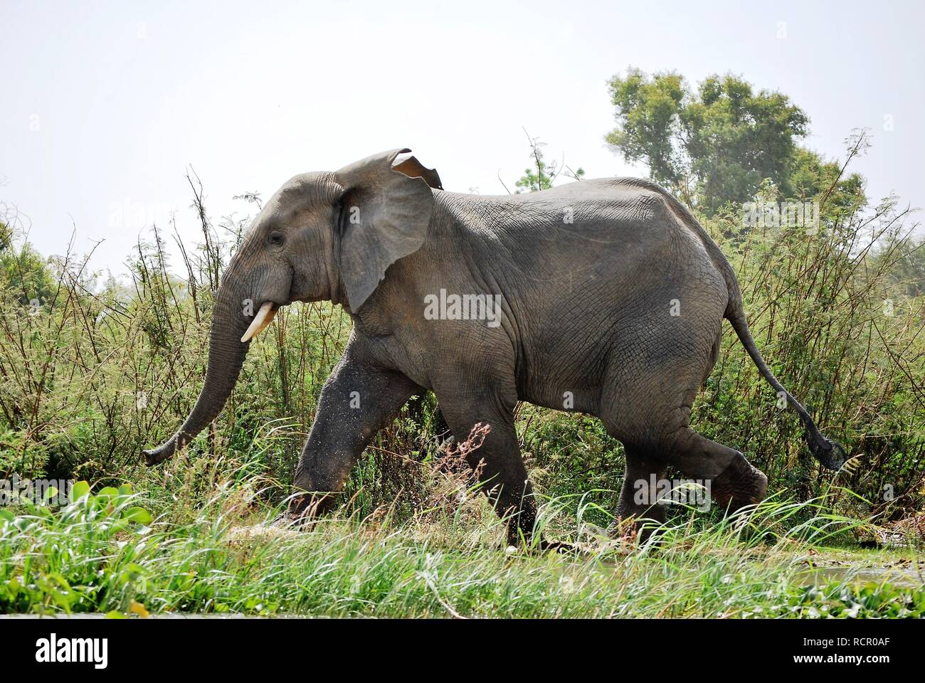 W Africa Stock Photos & W Africa Stock Images - Alamy