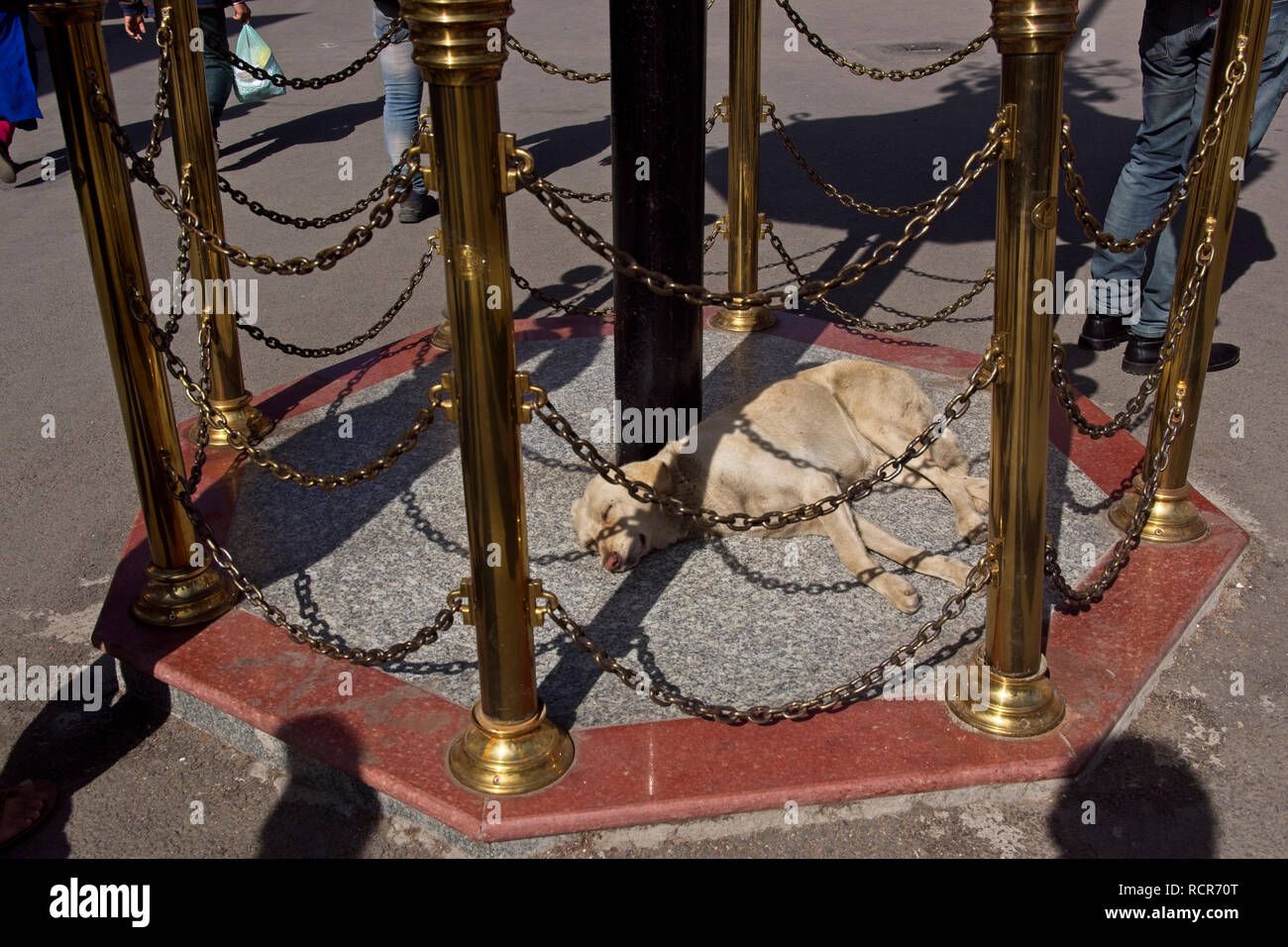 Taking an exotic dog nap. - Stock Image