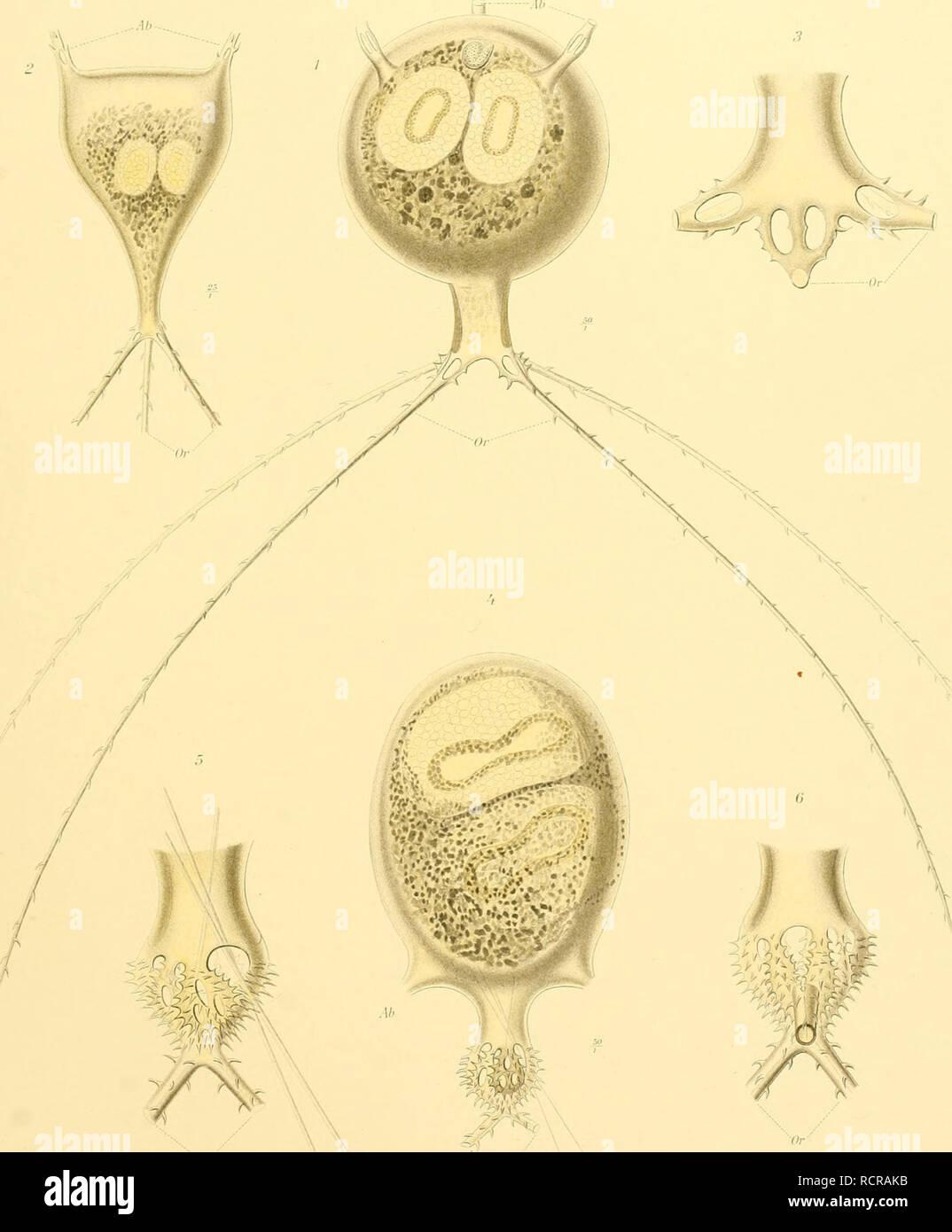 Tua Dua Eettafel.Deutsche Sudpolar Expedition 1901 1903 Im Auftrage Des