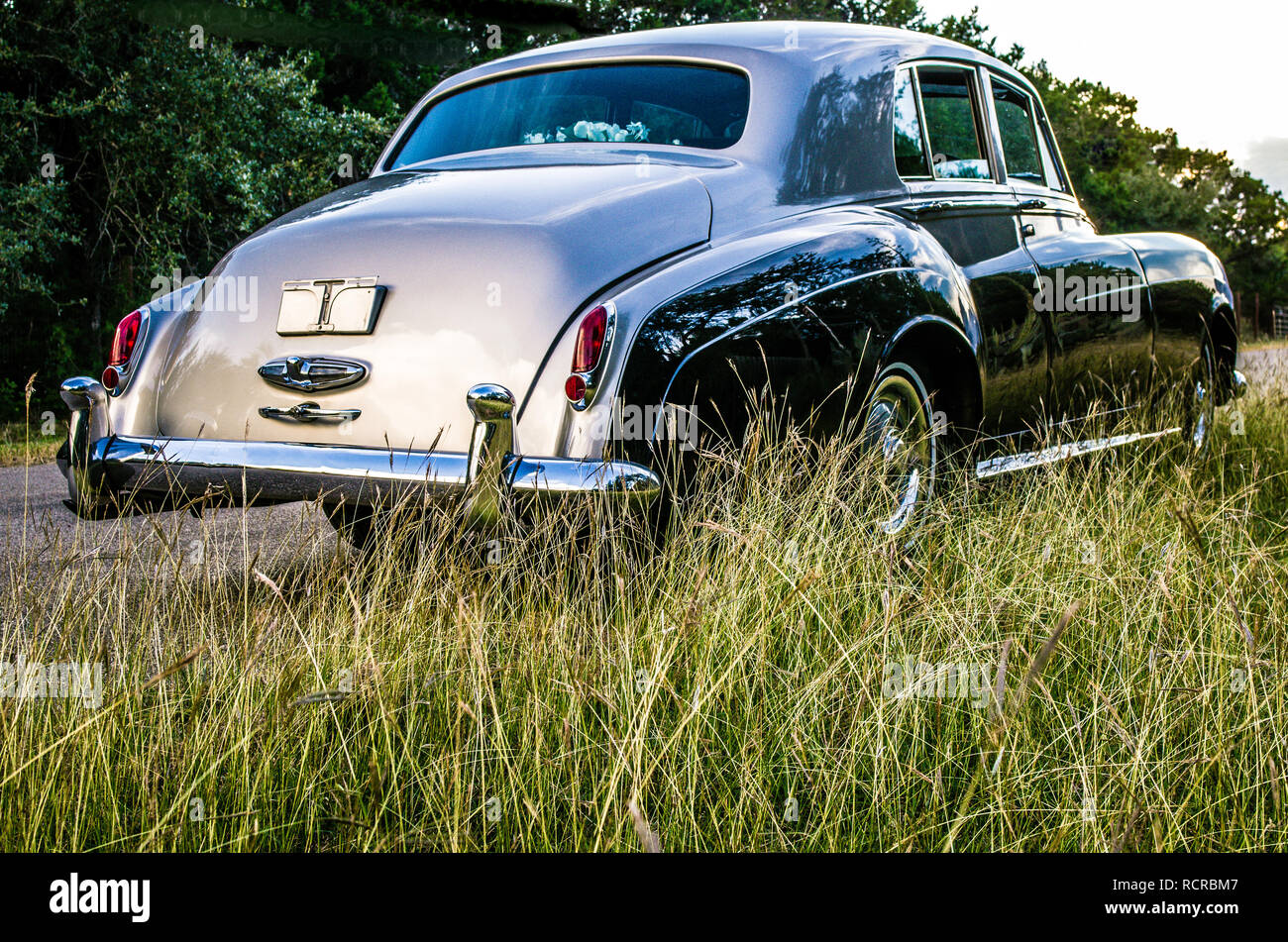 Rear view of the trunk of a two toned, luxury, vintage car on a Texas rural road with tall grass. - Stock Image