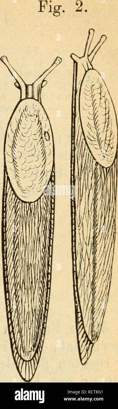schimmernde innenschicht bei mollusken