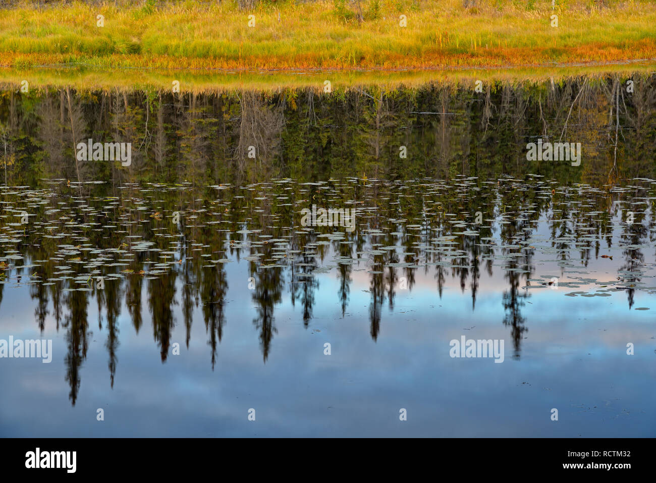 Evening skies and spruces reflected in a beaver pond, Yellowknife, Northwest Territories, Canada - Stock Image