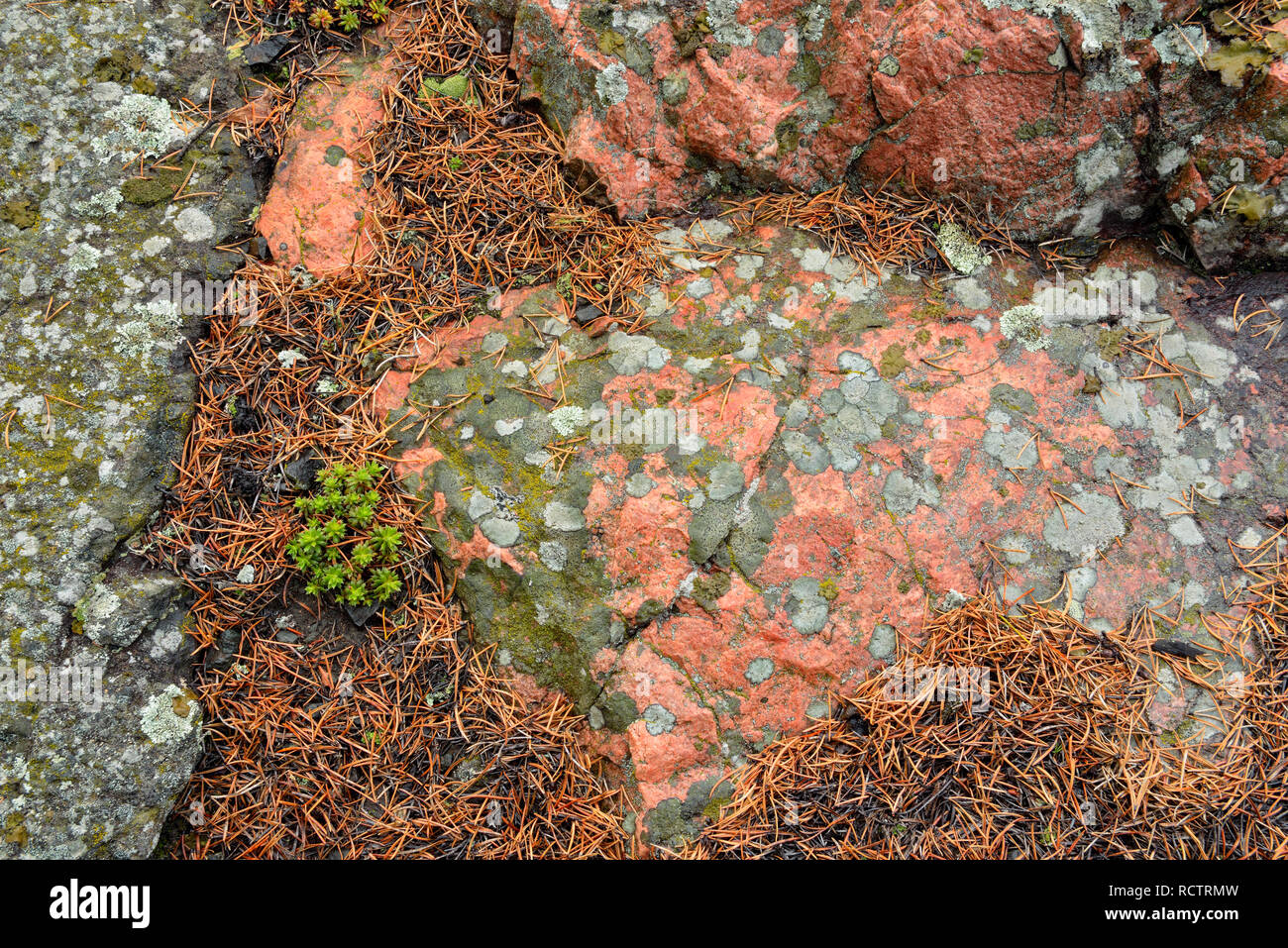 Precambrian shield granite with an orange igneous dyke, Yellowknife, Northwest Territories, Canada - Stock Image