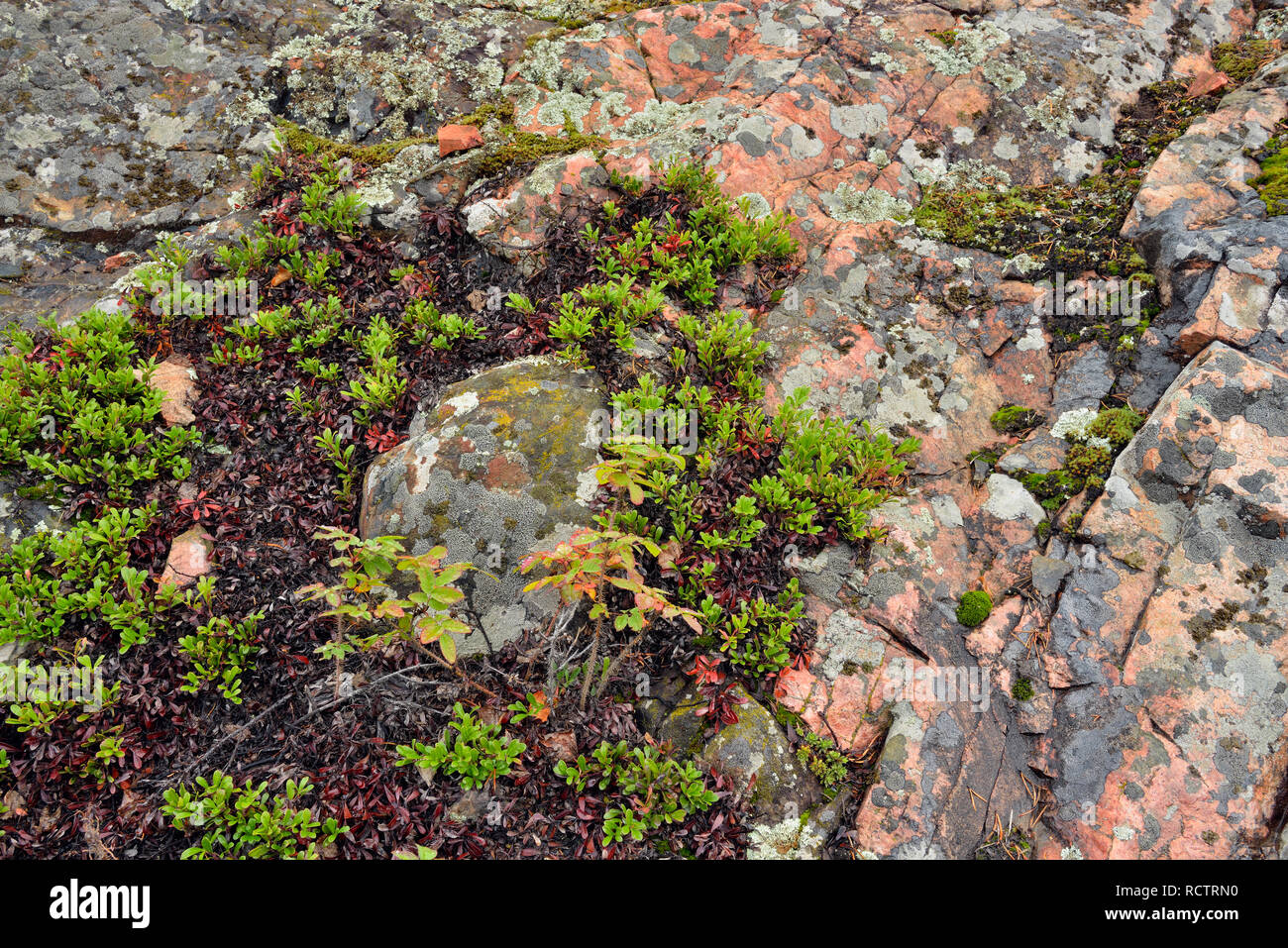 Precambrian shield granite with lichens and ground cover, Yellowknife, Northwest Territories, Canada - Stock Image