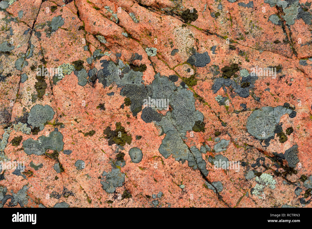 Precambrian shield granite with an orange igneous dyke and lichens, Yellowknife, Northwest Territories, Canada - Stock Image