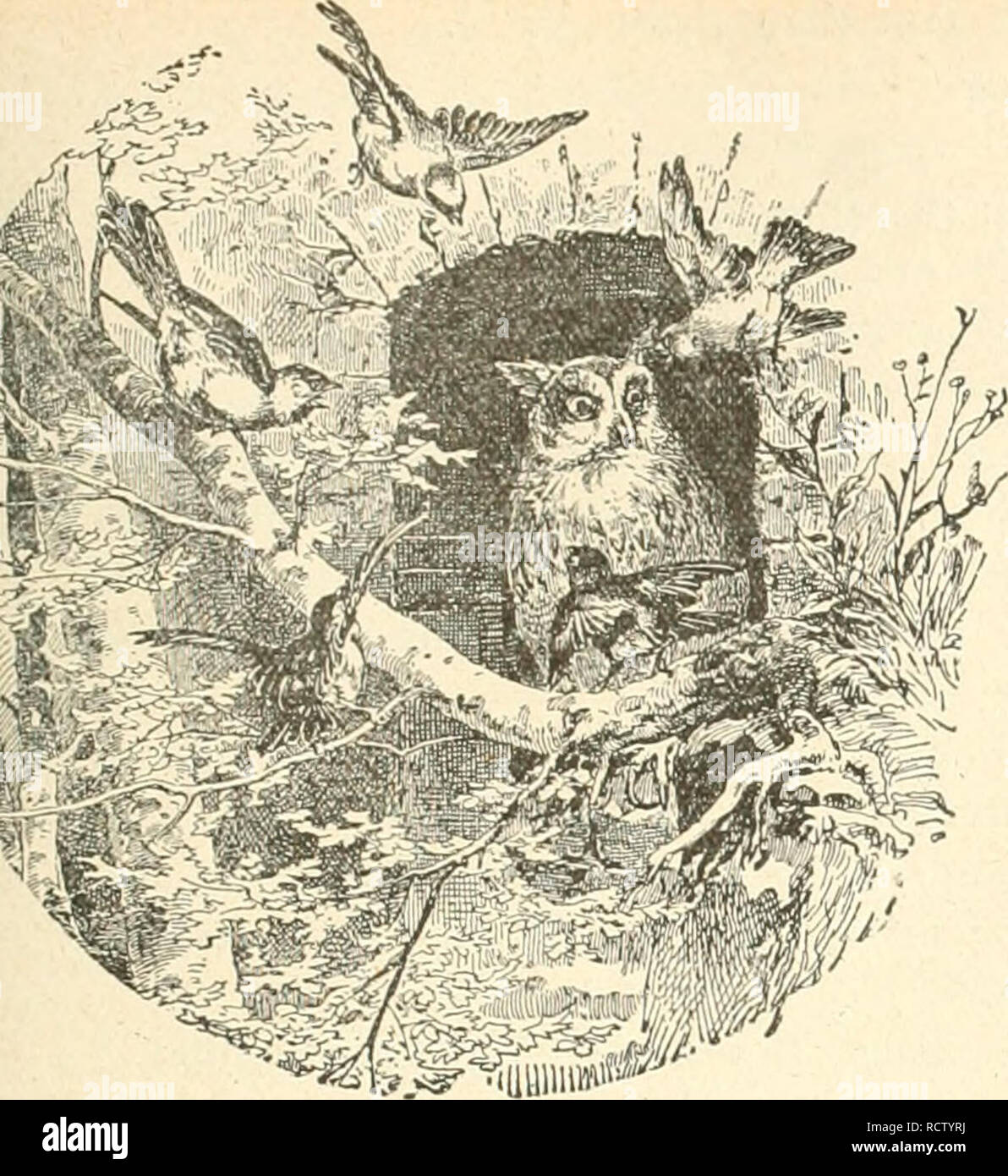 """. Der Ornithologische Beobachter. Birds; Birds. Keft 26. 36. Jnnl 1902. Jahrgang I.. mv j_ (grnitl^ülügis^l^e Ãeoba elfter. -""""^^J Woclienschrift für Yogellietihaber und Vogelschutz. â ^â ^ ' Herausgegeben von C. DAUT in Bern (Scliweiz). 000 Erscheint jeden Donnerstag. (Xai-hdruck imr nid (JuvlIciwiHiuhe mal EiiitciirKjuiKj der Auloroi yeslallel.) ^ Die Ammer. Ich fuhr durch mecklenburgisch Land, Durch Frühlingsgrün imd Sonnenbrand. Vom gelben Iiaj)s quoll schwüler Duft, Mit heissem Flimmern stand die Luft. Ich dachte das, ich träumte dies â Der Frühling ging mich an so süss. Ein  - Stock Image"""