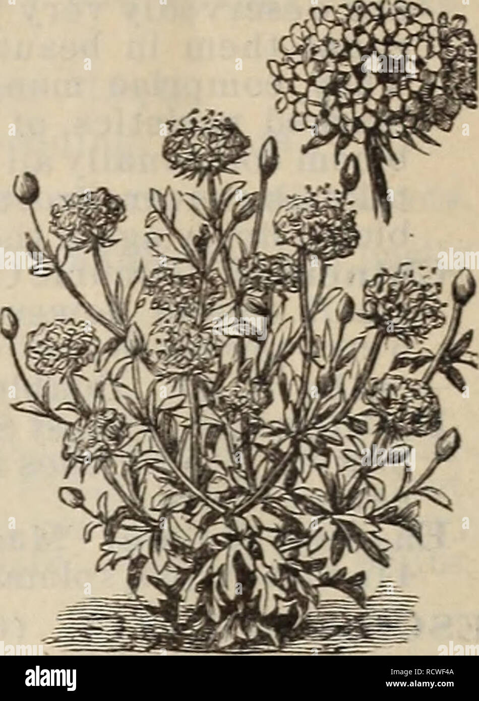 Descriptive Catalogue Trees Plants Seeds Trees Catalogs