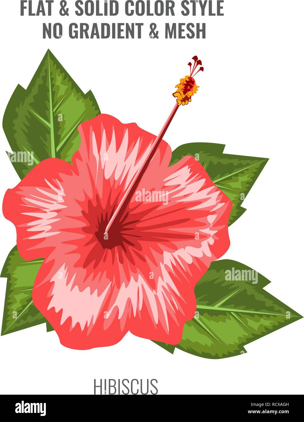 Hybiscus Flower Stock Photos Hybiscus Flower Stock Images Page 3