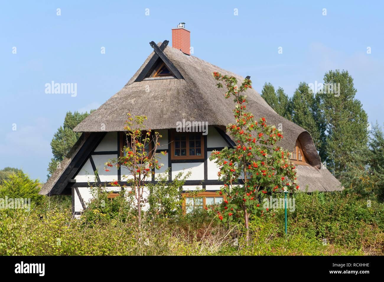 Thatched house, Ahrenshoop, Darss, Mecklenburg-West Pomerania, PublicGround - Stock Image