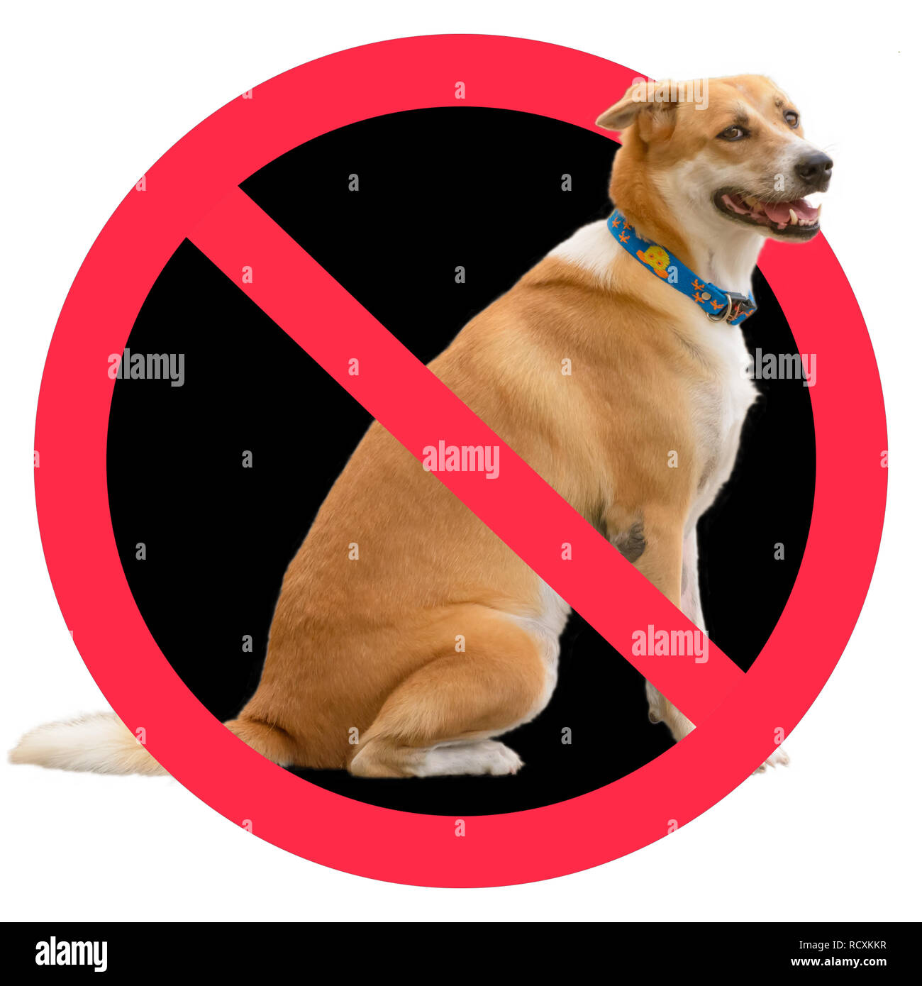 No dogs sign on a white background. - Stock Image
