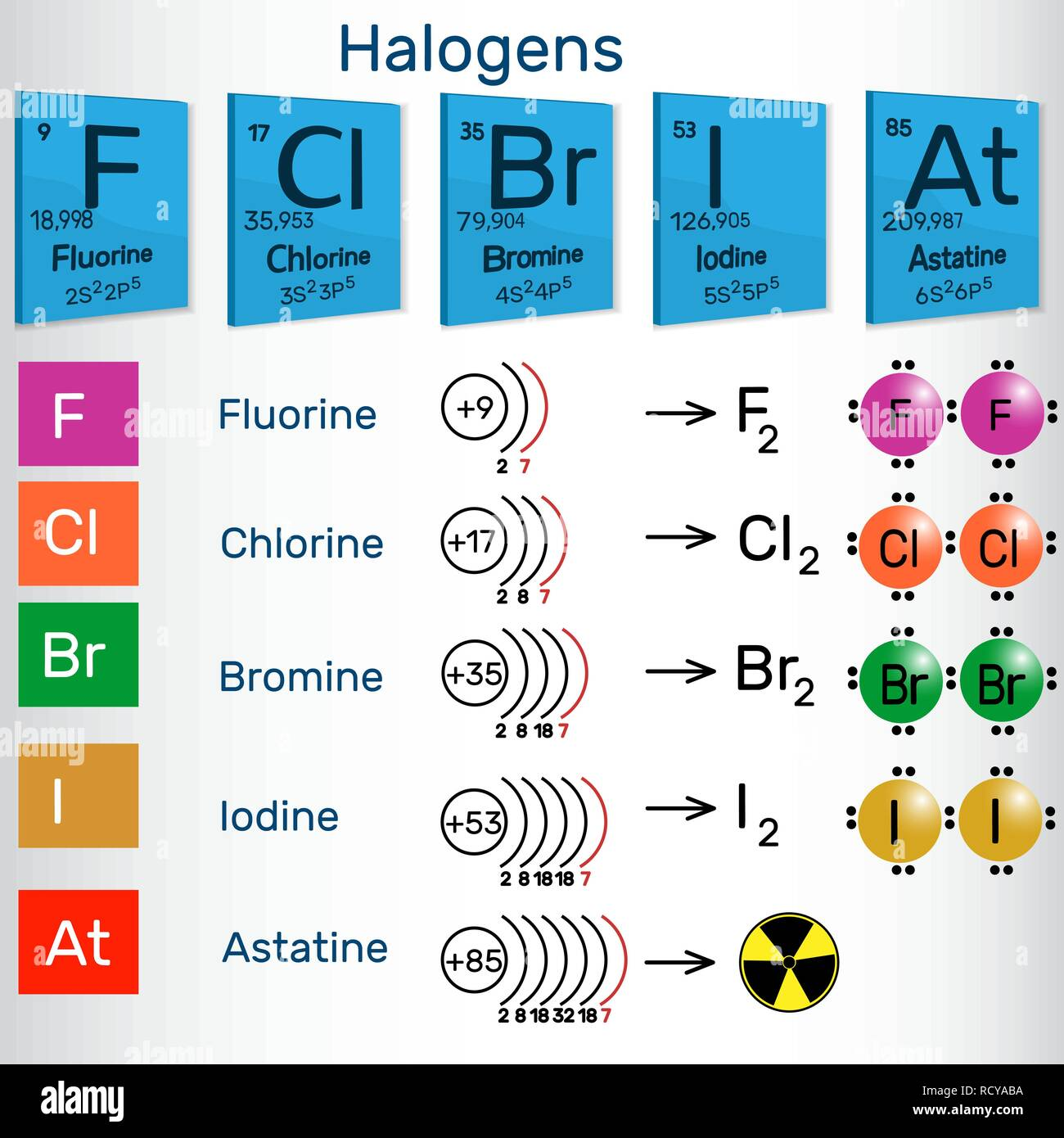 Halogens. Chemical elements of Periodic table. Vector illustration - Stock Image