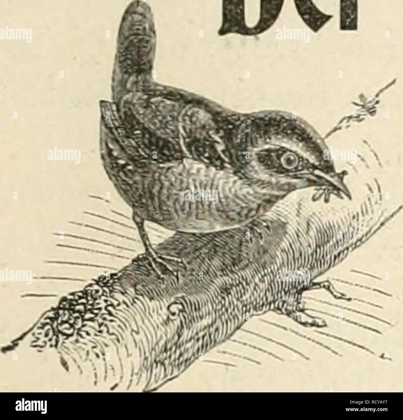 . Der Ornithologische Beobachter. Birds; Birds. fleft 16. 16. April 1903. J'alirjB:ang IX. Der Omitbologiscbe Beobacbter. Wochensclirift für Yogelliebhaber und Vogelschutz. Redaktion Carl Döut, Berii und öusMv voit Burg, Oltcn. f+ Erseheint jeden Donnerstag. Herausgegeben von Carl Daut in Bern (Schweiz). Inhalt: Oruithologische Beobachtungen, von Dr. L. Greppiu, Eosegg, Solothurn (Forts.). — Kuckuck, Eisvogel, Goldamsel und Star im Jahr 1902, von Dr. H. Fischer-Sigwart, Zofingen (Schluss). — Passer domesticus (Haussperliug) in Südamerika. — Notizen über die Abnahme der Vögel in Italien, von Ar - Stock Image