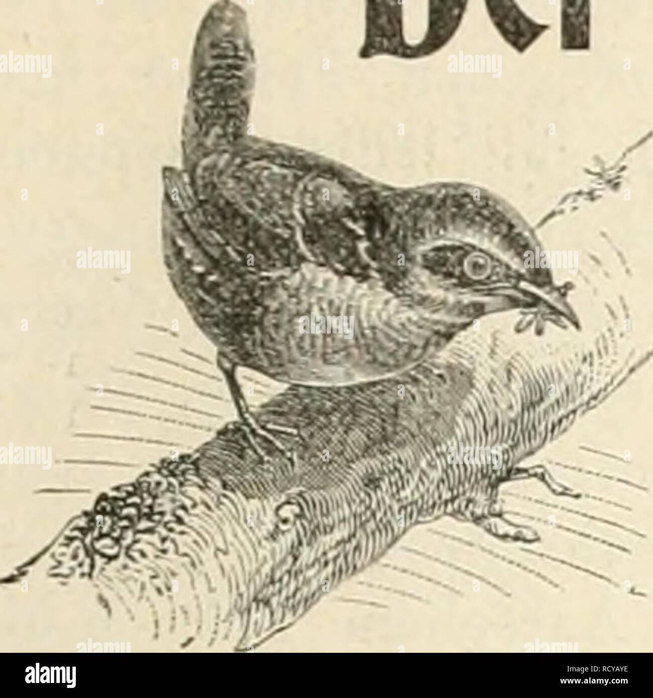 """. Der Ornithologische Beobachter. Birds; Birds. Heft IS^. 0. April 1903. Jalirj;aug I j. Der Ornitholodi$cbe Beobachter. Wochensctirift für Vogelliebhaber und Vogelschutz. Redaktion Carl Dawt, Bern und 6u$tav von Burg, Ölten. M-- Ersebeint jeden Donnerstag. Ileraiisgegeben von Carl Daut in Bern (Schweiz). Inhalt: """"Surrexif, C-reJicht. — Ornithologische Beobachtungen, von Dr. L. Greppin, Kosegg, Solothura (Forts.). — Kuckuck, Eisvogel, Goldamsel und Star im Jahr 1902, von Dr. H. Fischer-Sigwart, Zofingen (Forts.).— Der Frühjahrszug am böhmisch-mährischen Urgebirge, von Ludwig Siegel, Znaim. — N - Stock Image"""