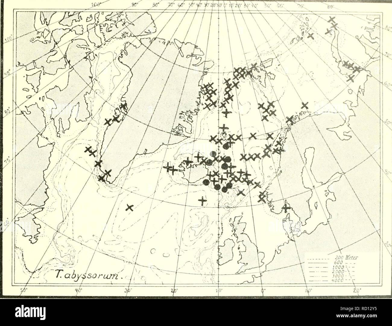 The Danish Ingolf Expedition Marine Animals Arctic Regions Scientific Expeditions