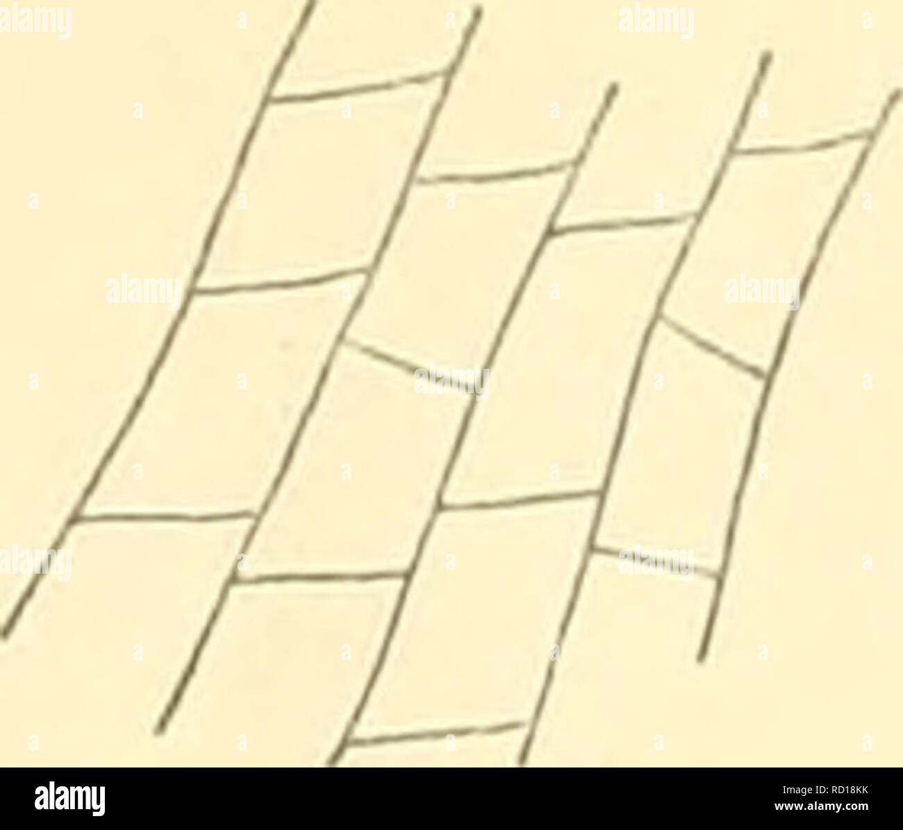 . Denkschriften der Kaiserlichen Akademie der Wissenschaften, Mathematisch-Naturwissenschaftliche Classe. (Citaki, Tidza oder Catak) liegen in diesem Gebiete. Die Schichten sind meist ganz flach gelagert, zeigen die durch auf die Schichtfläehen normalstehende Absonderungen entstehenden eigenthümlichen Erscheinungsformen eines natür- lichen Pflasters und bilden zugleich die elendesten Wegstrecken. Die Mergel nehmen vielfach ganz das Aussehen von mürben Kreidemergeln an. Die Höhe bei Osmanbasar (Fig. 4) besteht ganz aus flach SSW einfallenden wohlgescliichteten Sandsteinen (1), die mit Mergeln ( - Stock Image