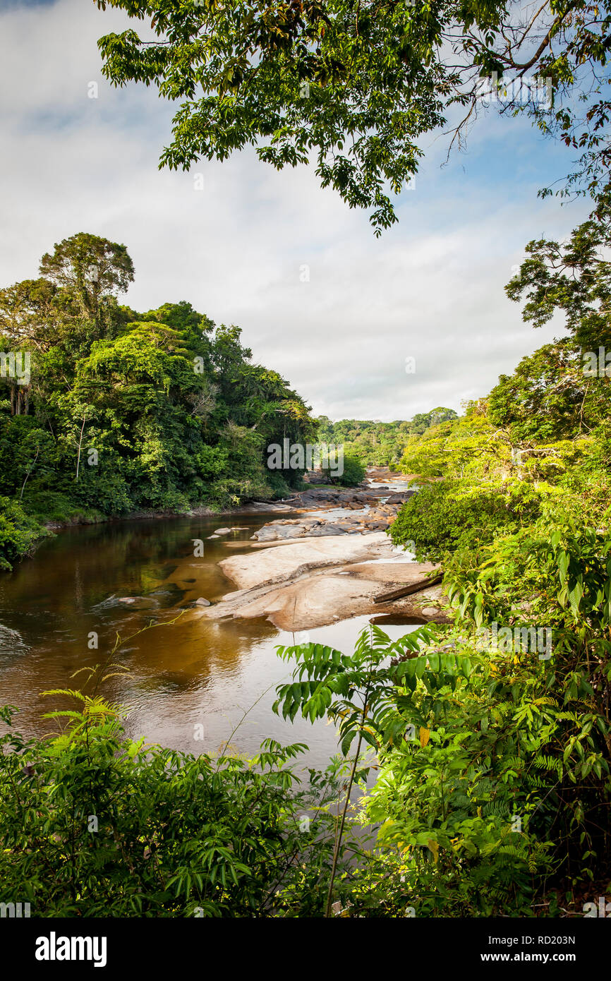 View on the Suriname river in Upper Suriname, Awarradam jungle camp - Stock Image