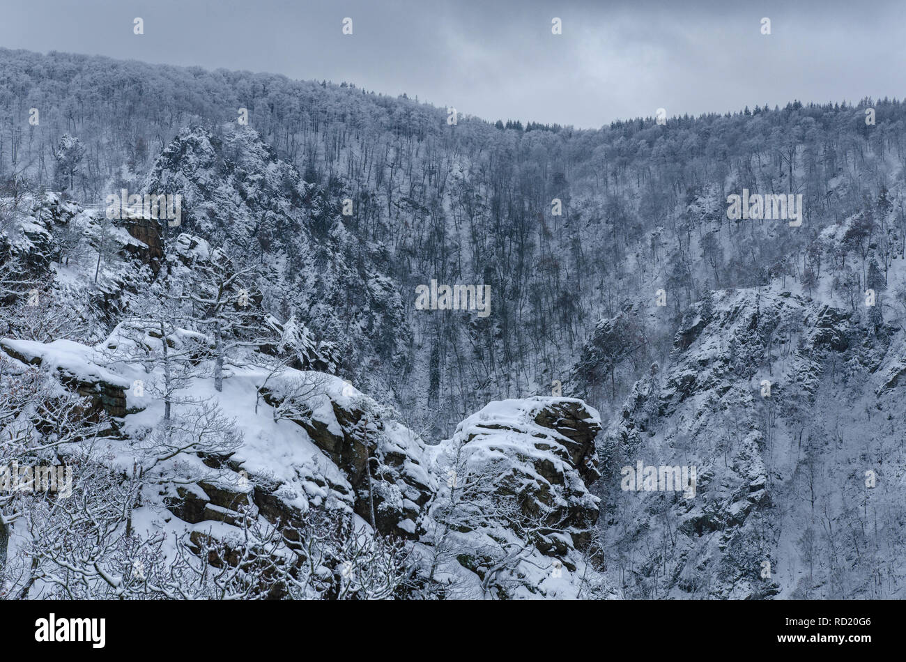 a picturesque scenery of Roßtrappe crag with the bare forest trees covered in snow in the Harz mountains on a cloudy winter day Stock Photo
