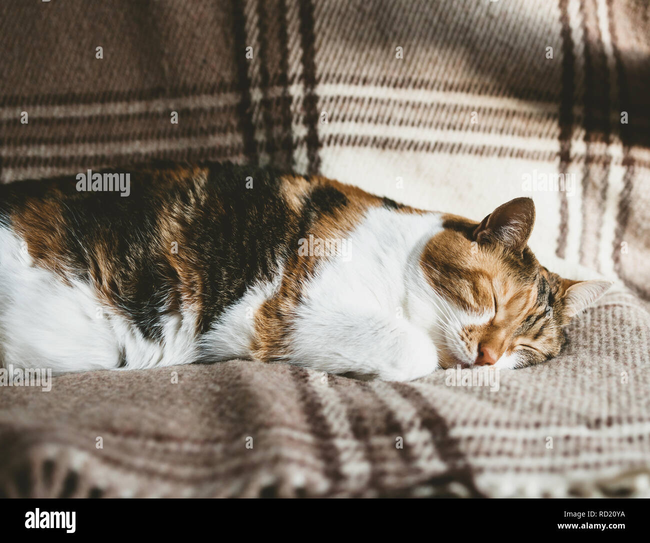 Extremely cute cat deep sleep on the blanket on a warm spring day - calm and peacefulness concept - Stock Image