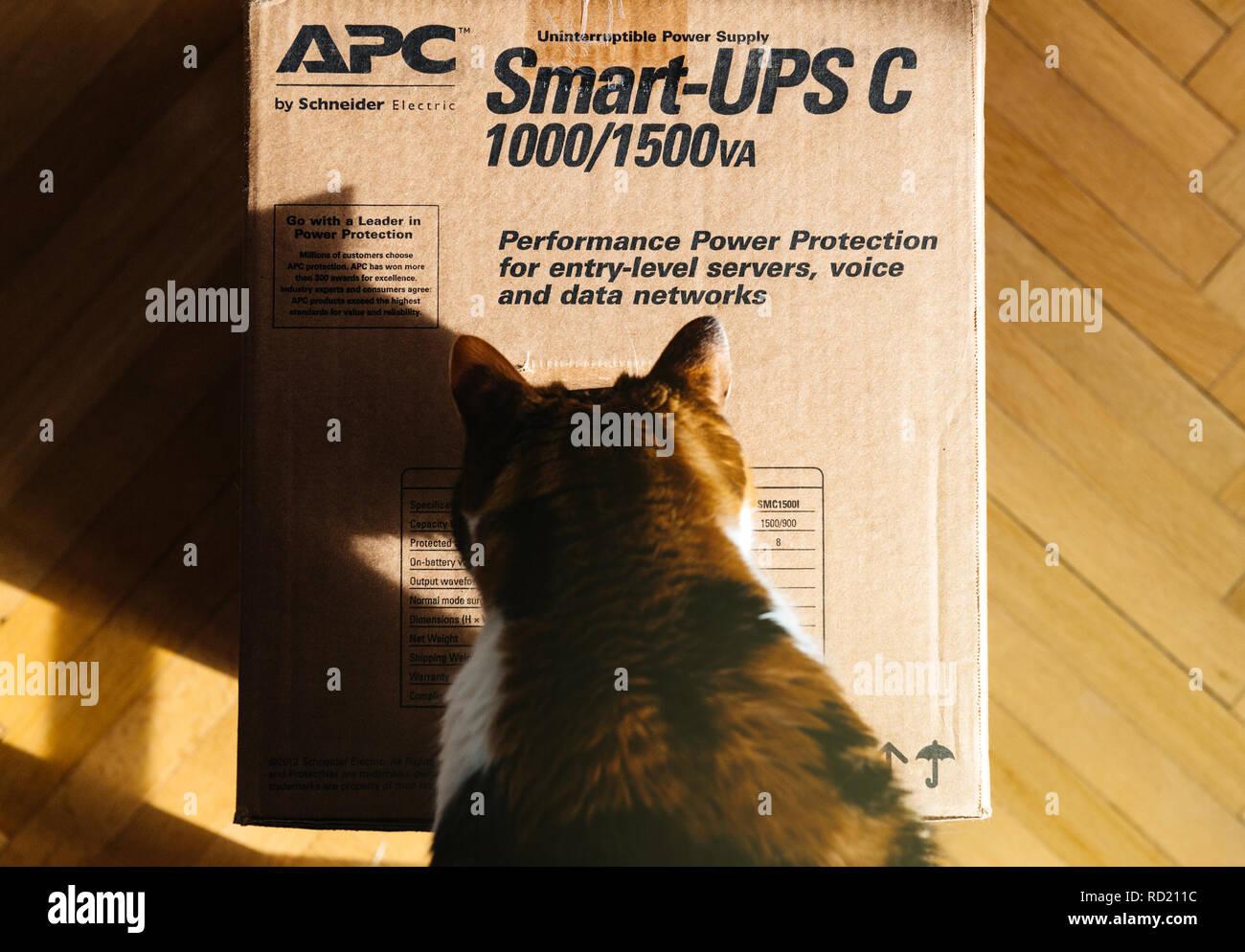 PARIS, FRANCE - MAR 29, 2018: Curious cat inspecting APC Smart-UPS C