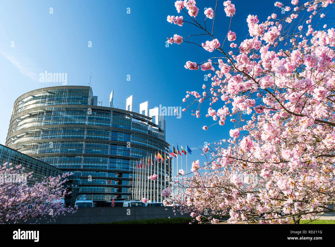 STRASBOURG, FRANCE - APRIL 6, 2018: European Parliament building with cherry tree in bloom sakura flowers on a warm spring morning with all European union flags waving - Stock Image