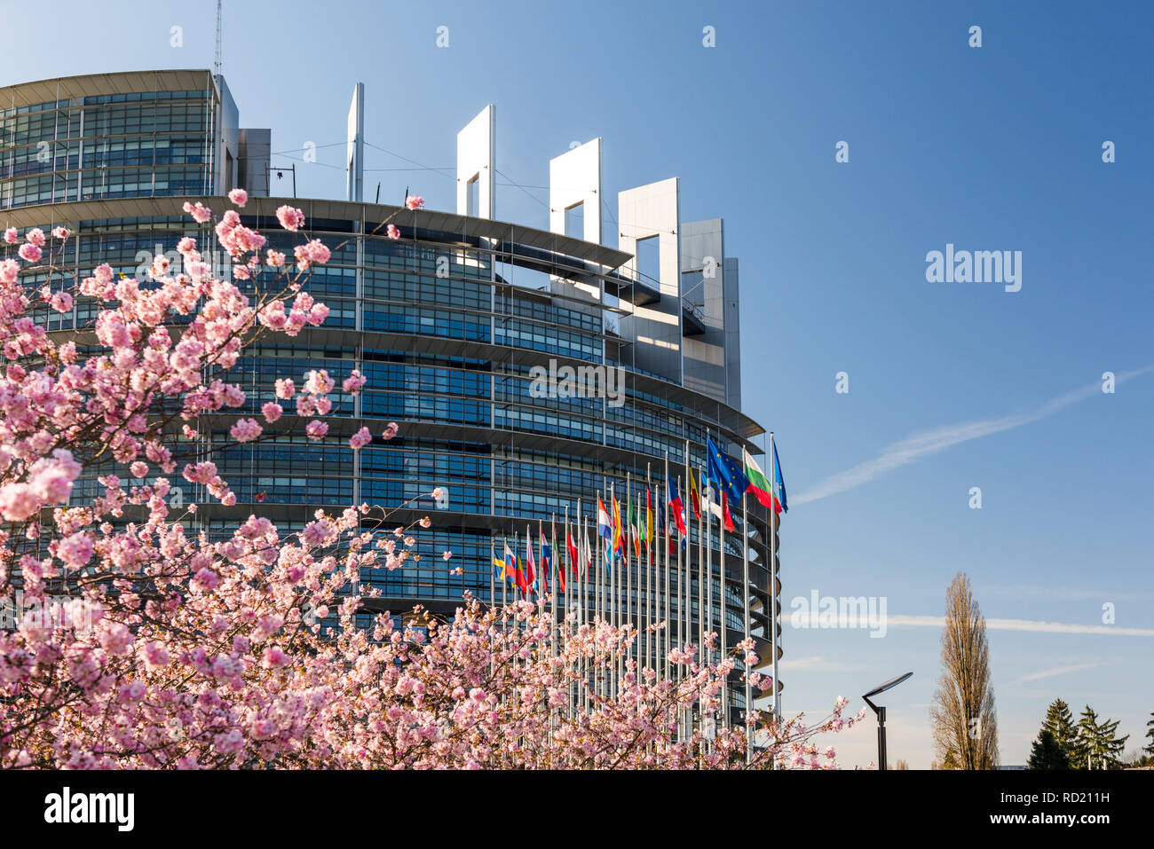 STRASBOURG, FRANCE - APRIL 6, 2018: European Parliament headquarter with cherry tree in bloom sakura flowers on a warm spring morning with all European union flags waving - Stock Image