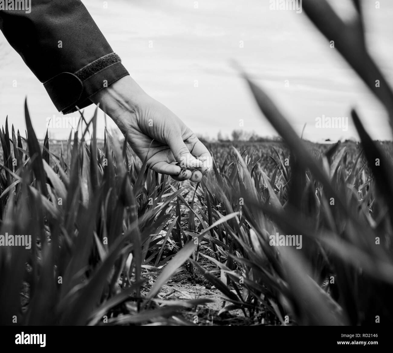 Agriculture Black And White Stock Photos & Images
