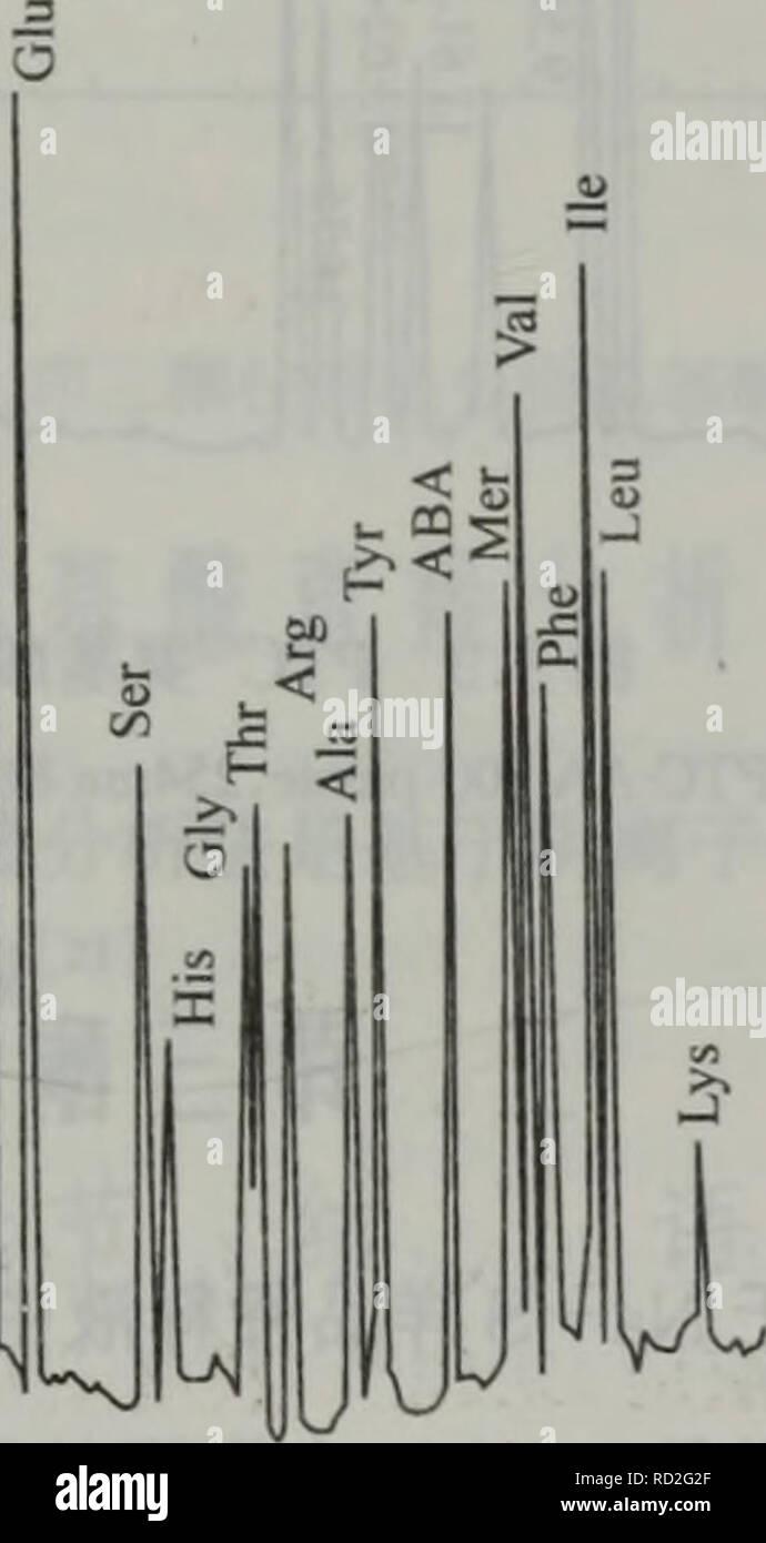 . dan bai zhi hua xue yu dan bai zhi zu xue. botany. åï¼æ··ååå¾ï¼ååºIminååå 人2(V1 O.lmol/LçKH2PO4ä¸-æ-¢ååºï¼å¹¶ç«å³å20ptl注 å ¥RP-HPLCæ±è¿è¡åæã 仪å¨ä¸ºBeckman 344 HPLC仪ï¼åç¸æ±RP-18(250mmX4,6mm)ï¼è§å æ£æµå¨ã æµå¨ç¸ï¼A:50mmol/Lä¹é ¸ç¼å²æ¶²pH6.8:ç²é:THF = 80:19:1 B:50mmol/Lä¹é ¸ç¼å²æ¶²pH6.8:ç²é= 20:80 梯度æ¡ä»¶æ¯ï¼5minï¼10o/oB;10minï¼15%B;20minï¼10%B;25minï¼15O/6B;35minï¼50O/()B; 50mm ï¼ 90 % B ï¼ 55min ï¼ 100 96 Bã æ们å®éªå®¤æ¾æ¥éè¿ç¨ä¹é代æ¿å§æ¯çä¹è æç²éä½ä¸ºææºç¸æ¥å®éåææ°¨åºé ¸ï¼ çµæ度å¯è¾¾10pmoP9]ã 100 80 60 40 20. 0 15 30 45 Mtiin 60 å¾3.2 OPAæ³æ±åè¡çæ³åææ°£åºé ¸ åç§æ°¨åºé ¸è¡çç©åä - Stock Image