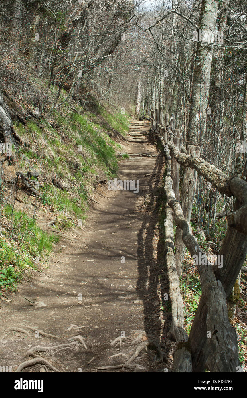 Appalachian Trail at Newfound Gap, Great Smoky Mountains National Park, border of NC and TN. Digital photograph - Stock Image